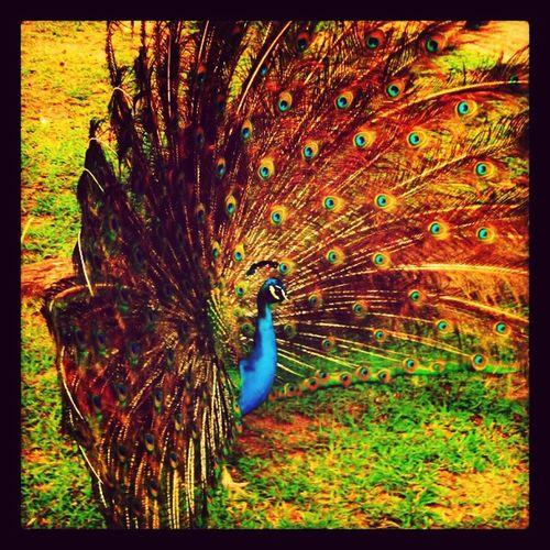 Animal. Instagood, #tweegram #photooftheday #sketch,#sketchclub,#malen,#painting,#instagram,#picoftheday,#art,#star,#followme,#follo Animals Hello World Enjoying Life