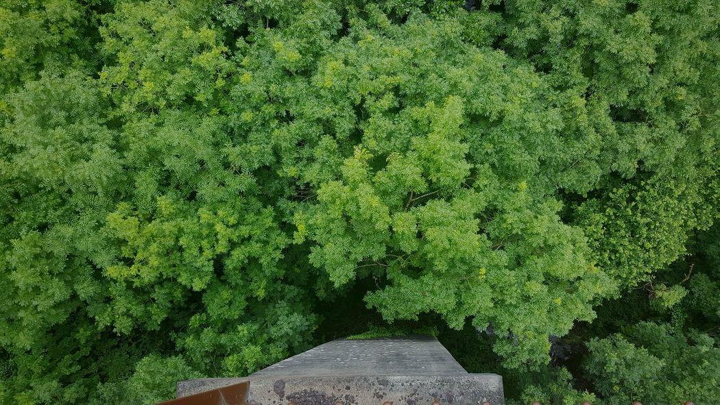Walk Way Looking Down Aerial Bridge Pillar Stone Concrete Metal Trees Green Brown Dungarvan A Bird's Eye View The Great Outdoors - 2017 EyeEm Awards