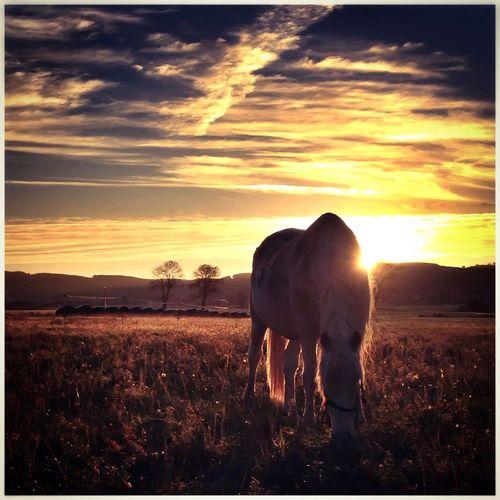 Enjoying The Sun IPhoneography Sunshine Movilgrafias Hello World Cantabria Cantabriainfinita Popular Photos