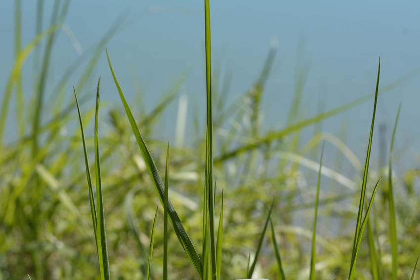 Macro Photography Grass And Water Blurred Background Camera Practice Nature Photography Day In April The Great Outdoors - 2016 EyeEm Awards