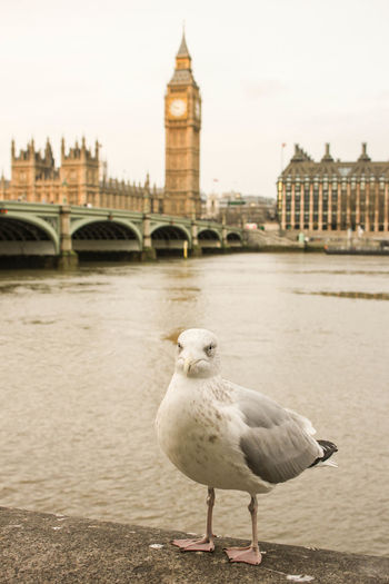 Close-up of seagull perching by thames river