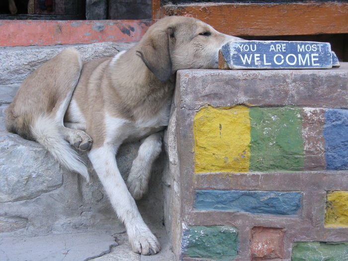 Close-up of dog on road