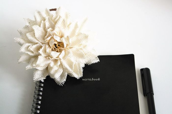 Flower Flower Head Pen And Paper Spiral Notebook Studio Photography Contrast Studio Shot White Background Write Writing