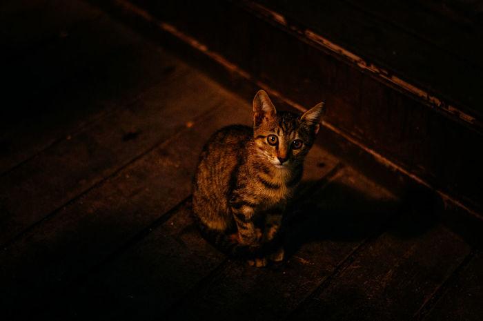 cute cat pics Cute Cat Dark Cat Cute Darkness And Light Night