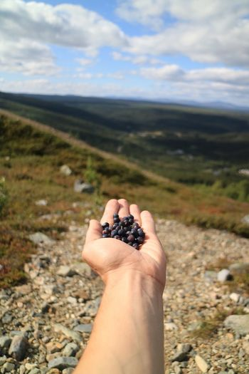 Close-up of hand holding berry fruits on field against sky