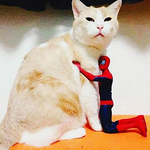 'Kitty,i love u' 'Nope,I hate u spidey'