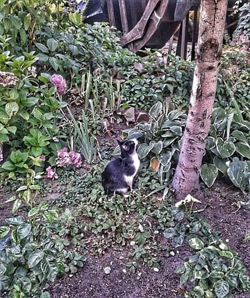 She is waiting for the bird Cat Cats Of EyeEm Cat Of The Day Cat Hunting  Flowers,Plants & Garden At The Park Taking Photos Let's Do It Chic! Cleaning My Account At EyeEmjj Summer2015