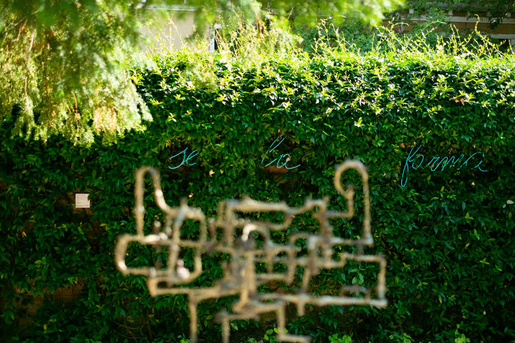 Guggenheim Museum Peggy Guggenheim Collection Plant No People Nature Day Growth Selective Focus Outdoors Green Color Grass Close-up Beauty In Nature Front Or Back Yard Flowering Plant Tree Flower Communication Text Field Cemetery Creativity