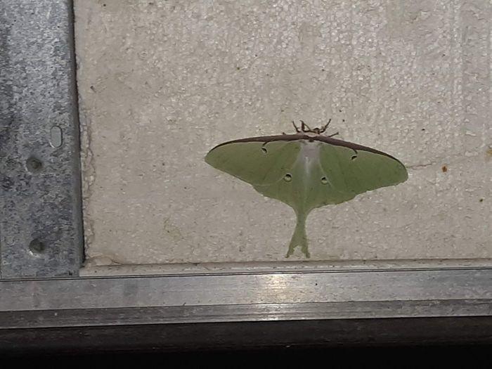 Moth Green