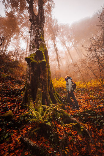 Man standing by tree in forest during autumn