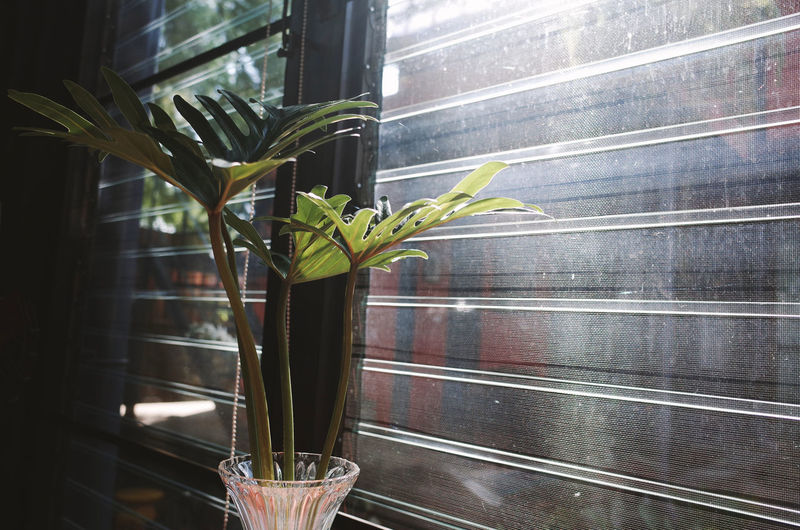 Plant Leaf Plant Part Growth Window No People Potted Plant Glass - Material Nature Close-up Freshness Day Indoors  Transparent Green Color Food And Drink Beauty In Nature Glass Wood - Material Houseplant
