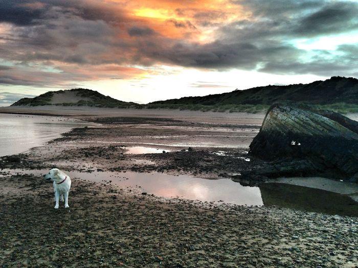 scotland Beach dog