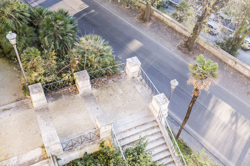 Ancient Architecture Architecture Beauty In Nature City City Street Day Growth High Angle View Italy Nature No People Outdoors Palm Tree Rome Rome Italy Street Tree