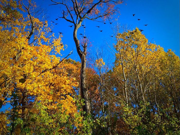 Yellow, New England, Warm, Day, HDRiphoneography, Morning, Dusk, Dawn, October, Morning, Day, Orange, Halloween, Spiritual, Mystical, New England, Season, Tree, Maple Tree, Colors, Hughes, Yellows, Reds, Oranges, Green, Fall-time, Season, Seasons, Photo O