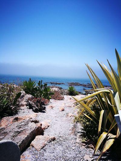 EyeEmNewHere EyeEmReady Sea Nature Beach Blue Sunlight Day No People Beauty In Nature Horizon Over Water Scenics