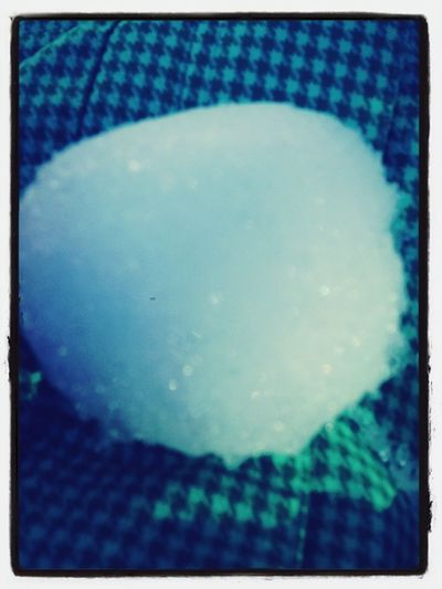 Baby Snowball