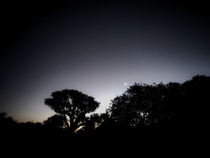 Low angle view of silhouette trees against clear sky at night