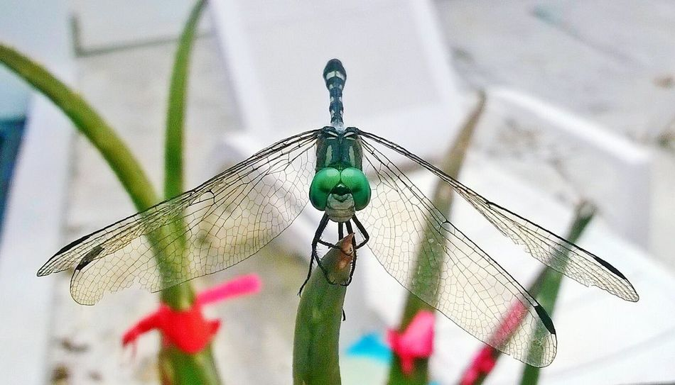 Dragonfly Nature_collection Nature Photography Wings Beauty In Nature