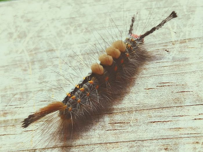 Catapiller Angry Birds Future Butterfly Fuzzy Caterpillar Hairs Break The Mold