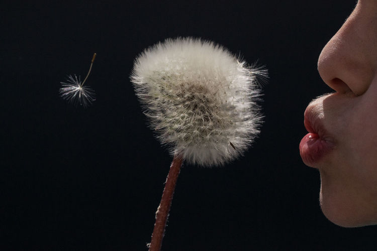 Dandelion Seed Innocence Puffing Black Background Blowing Child Close-up Dandelion Departure Ease Flower Flower Head Flying Fragility Freshness Human Body Part Lifestyles Lightness Lipps Nature Nose Inner Power Summer Exploratorium Visual Creativity Focus On The Story This Is My Skin The Portraitist - 2018 EyeEm Awards 50 Ways Of Seeing: Gratitude My Best Photo Analogue Sound