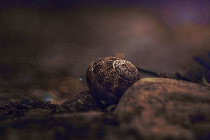 Close-up Nature No People Autumn Outdoors Fragility Food Beauty In Nature Freshness Day Nature Snail Minimalism Dark Light And Shadow Light Naturelovers Road Beauty In Nature Bokeh Still Life Animal Themes