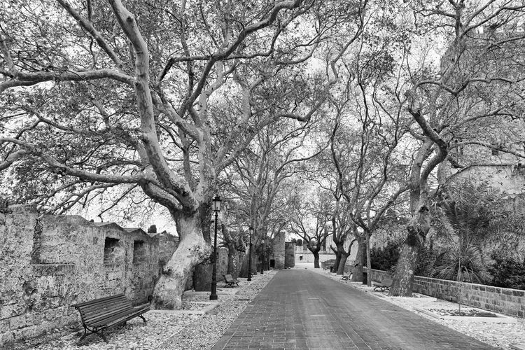 Old Town - Rhodes Street Footpath Greece Rhodes Old Town Medieval Palace Of The Grand Master Trees Black And White Travel Destination Holiday Vacation Tree Travel Destinations Travel Holidays Vacations Places To Visit Beautiful Treelined Architecture City No People
