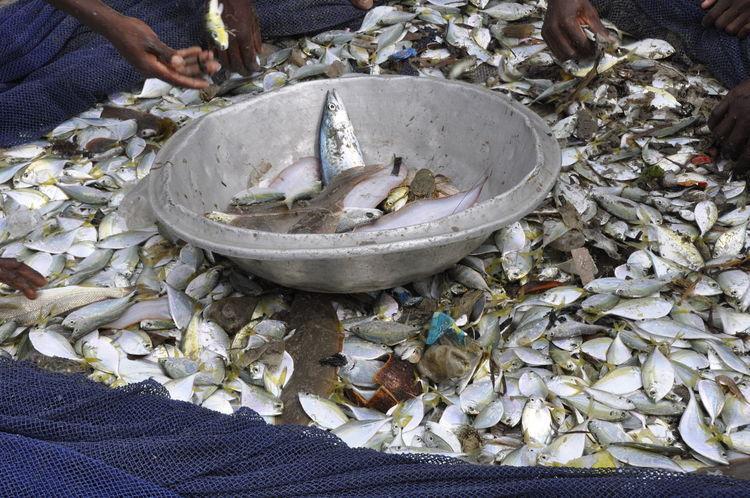 Environment Environmental Pollution Fish Fishing Fishing Net Fishing Village Food Plastic Trash Plastic Waste Pollution Poor People  Poverty Sea Sea Pollution Third World Third World Country Trash Central Region Ghana