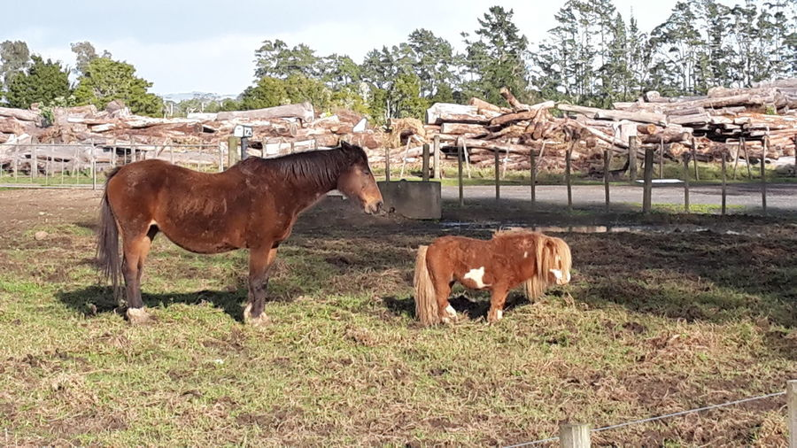 Pony Horse Miniture Pony Sizedoesntmatter Perspective Country Life Country Living Animal Animal Photography Animals Posing