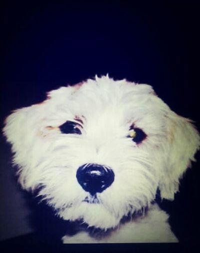 My Dog Beauteful Cute
