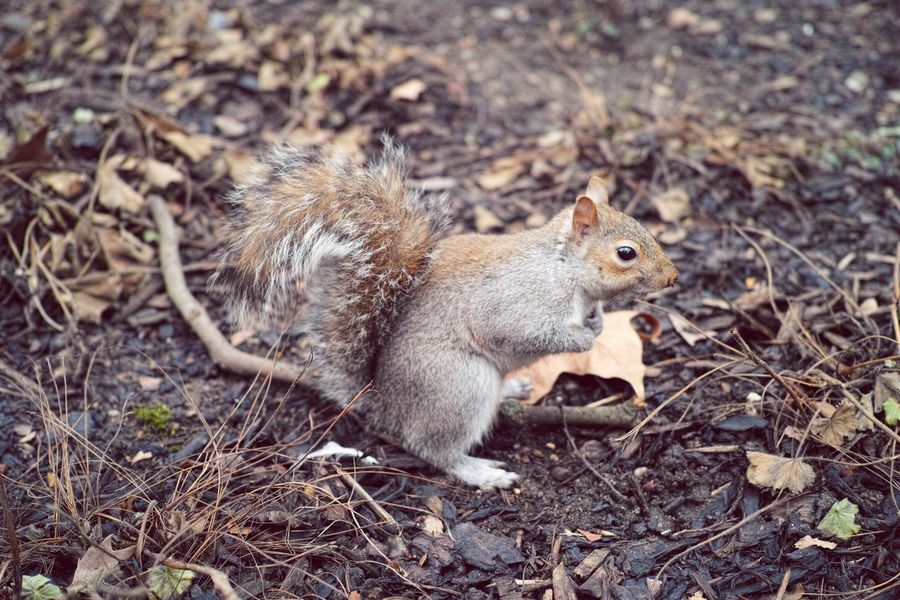 Squirrel Cute