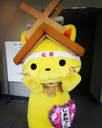 島根 島根県 ゆるキャラ しまねっこ しまねっこかわいいね かわいい ねこ ねこ 猫 ねこ部 機敏な動き 撮影ポーズ