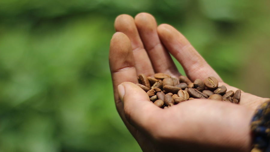 coffee beans Coffee Coffee Beans Beans Human Hand Human Body Part Nature Holding Day Outdoors Green Color Close-up Beauty In Nature Plant Growth California Dreamin
