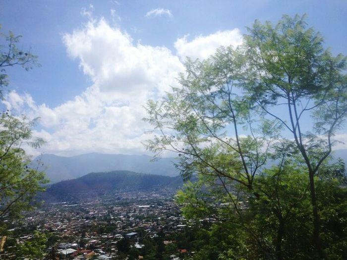 🌄 OAX. Mexico Oaxaca Zapoteca Tree Mountain Tree Area City Forest Pinaceae Pine Tree Sky Landscape Mountain Range Valley