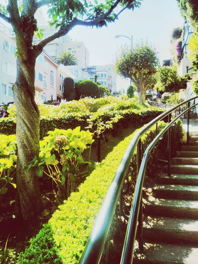 Lombard Street Architecture Built Structure Sunlight Building Exterior Tree Day Outdoors Shadow No People City Nature Sky Crooked Street San Francisco Architecture San Francisco, California Residential Building Low Angle View Architecture City Steps And Staircases Grass Summer