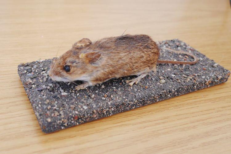 High angle view of an animal on wood