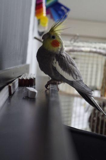 Mybird Enjoying Life Taking Photos Eye4photography  EyeEm Animal Lover Capture The Moment