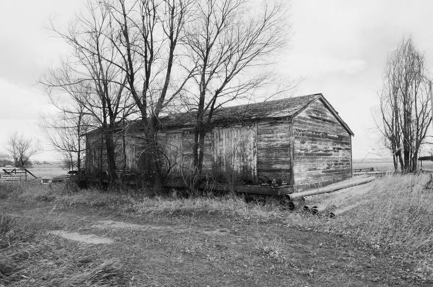 In small town, old, abandoned and weathered Huntly Wyoming Abandoned Bare Tree Building Exterior Built Structure Day Landscape Outdoors