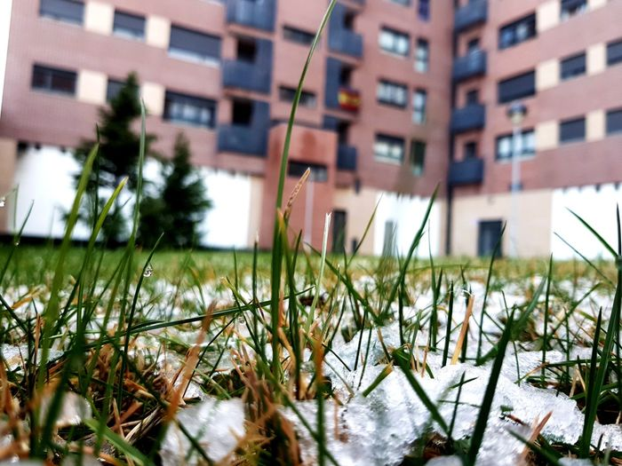 Close-up of grass in city