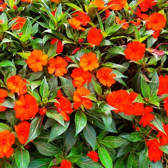 Emirgan Koru Park çiçek flower color istanbul nature doga manzara red