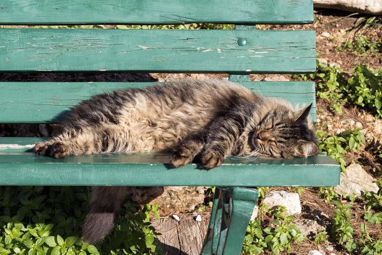 Sleepy Cat Animal Animal Themes Cat One Animal Relaxation Sleeping Pets Resting Lying Down Bench Tired Dreaming Sunbathing Lazy Moggie Cute Beautiful Furry Comfortable Taking A Nap Nap Siesta Nap Time Sleepy Asleep