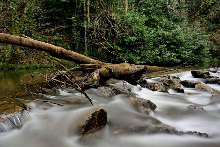 River Avon, Gara Bridge, Devon Gara Bridge Devon South Hams River Avon Outdoors Day Beauty In Nature Tree Scenics