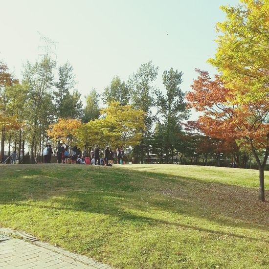 autumn. Autumn Colorsplash