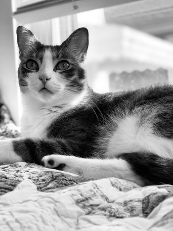 Blackandwhite Cat Animal Themes Feline Mammal Animal Pets Domestic Cat One Animal Domestic Animals Domestic Vertebrate Bed Furniture No People Home Interior Relaxation Looking Away Whisker Indoors  Close-up