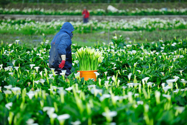 Flower agriculture is planted, and hard-working farmers are collecting sea otters. Plant Growth Flower Flowering Plant One Person Nature Working Freshness Selective Focus Gardening Beauty In Nature Agriculture Green Color Field Day Rural Scene Land Side View Holding Outdoors Springtime Farmer Planting Harvest Sea Otter