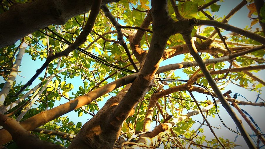 Low Angle View Moaizphoto Low Angle View Photography Nature Photography Tree