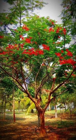 Beauty In Nature Green Color Freshness Outdoors Scenics Leaf Nature