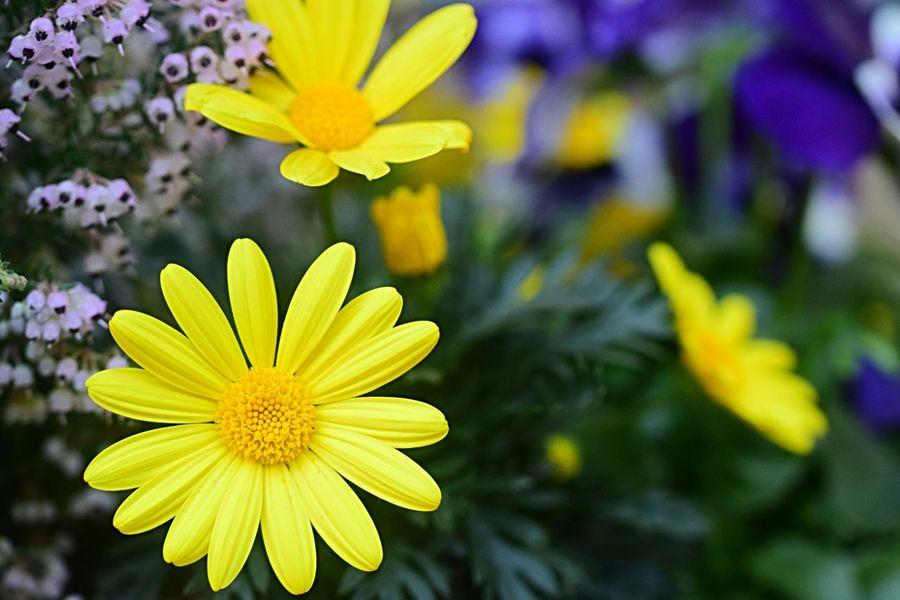 Colors Colorful Fleshyplants Flowerporn EyeEm Flower Flowers Petal Flower Collection Dreamy Yellow Wintertime EyeEm Nature Lover Yellow Flower Bokeh