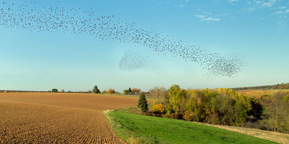 Flock of birds on field against sky