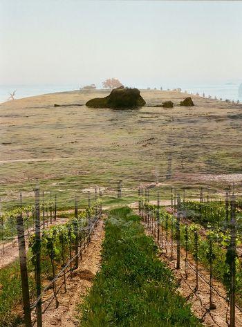 Double Exposure 35mm Film LightAndLove Central Coast, CA Wine Country Pirates Cove