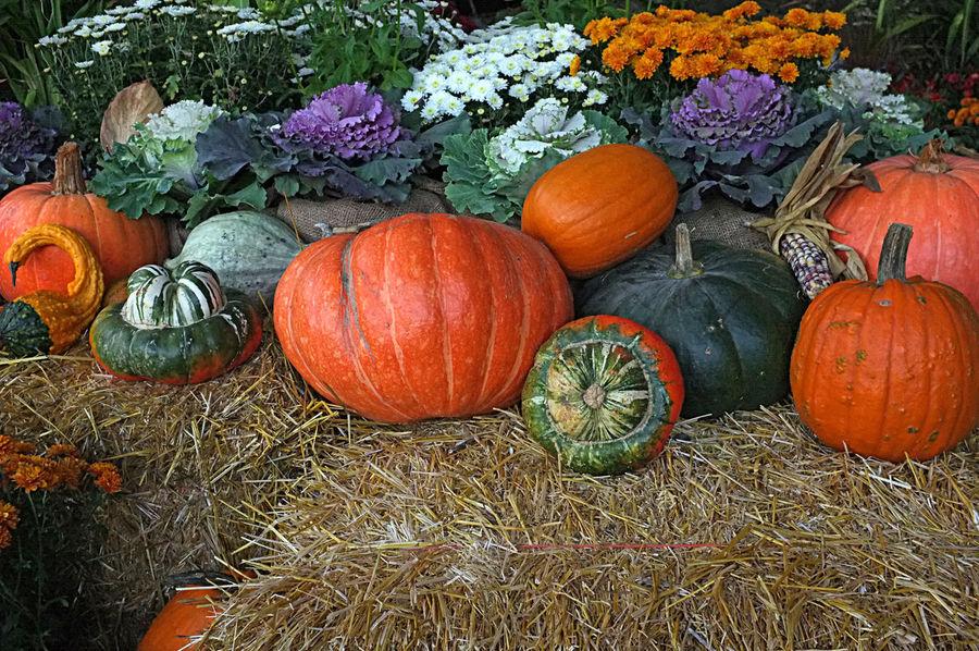 Photo of autumn crop harvest showing pumpkins, winter squash and vegetables. Cucurbita Pepo Autumn Autumn Colors Crop  Green Grocer Halloween Harvest Pumpkin Squash Vegetables & Fruits Winter Squash